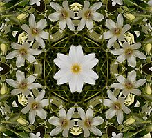 A Clematis Kaleidoscope by Brenda Anderson