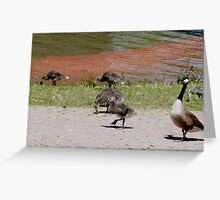 baby canada geese Greeting Card