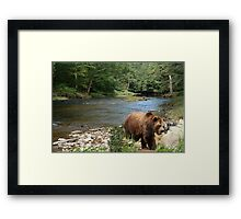 870-Summer Creek Framed Print