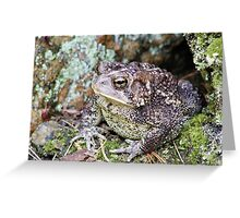Lonely Mr Toad Greeting Card