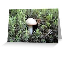 Lonley Fungus Greeting Card