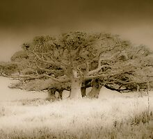 The old lonely trees by numgallery