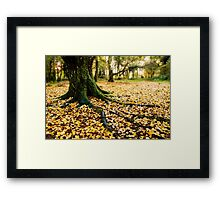 Forest Roots Framed Print