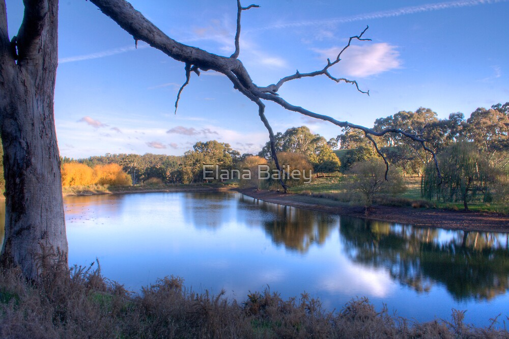 Overlooking the lake at Oakbank by Elana Bailey