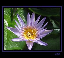 Lavender Water Lily by Keith Richardson