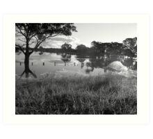 Scenic Swamp Art Print