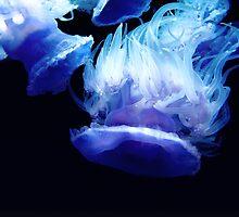 BlueJellyfish  by Julie Duczynski