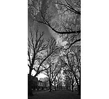 Autumn morning in McCarthur Park Photographic Print
