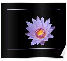 Lavender Water Lily Glowing Poster