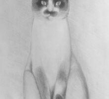 CAT by Luci Feldman