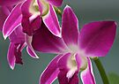 Orchids by Dave Lloyd