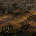 Misty Morning Sunlight by Mark  Nangle