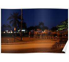 Mystical Camels at Cable Beach Poster