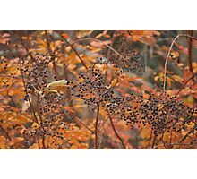 berry land Photographic Print