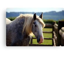 Redwings Major Canvas Print