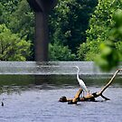 Egret by Walter Strength