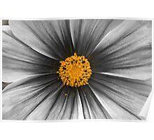 BW Flower Poster