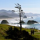 Pacific Northwest by Katie Gill