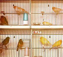 Marché Aux Oiseaux #2 by ALICIABOCK