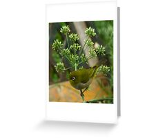 Silver eye and Fennel Greeting Card
