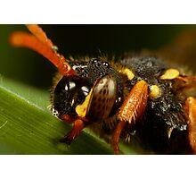 Nomada Bee close up Photographic Print