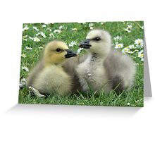 Lesser Snow Goose Goslings Greeting Card