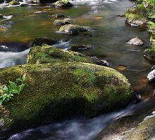 River Hebden, Hardcastle Crags II by Robert Nicholson
