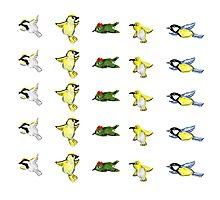 Tiny birds print Photographic Print
