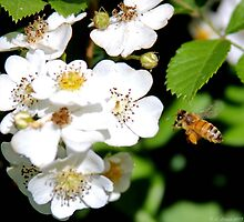 Busy as a Bee by lletizia
