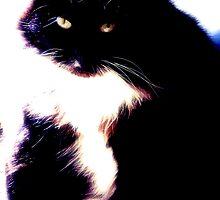 cat reclined by aqua68