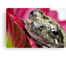 Gray tree frog 2 Canvas Print
