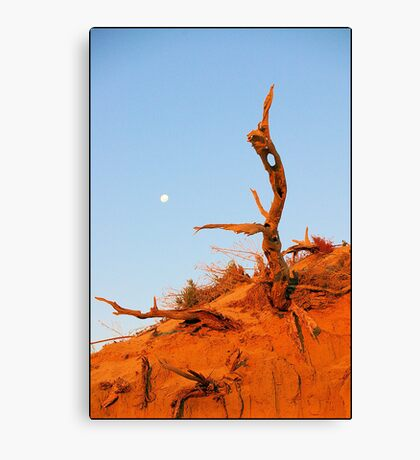 Outback Tree Canvas Print