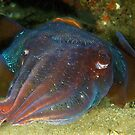 Giant Cuttlefish by MattTworkowski