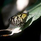 resting on a leaf by lisa9