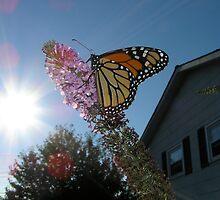sunny butterfly by Tijen