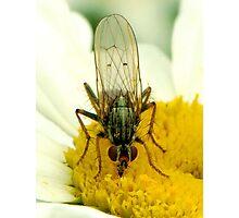 Nectar Sucker Photographic Print