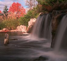 Hot Tree Cool Falls by Adam Bykowski