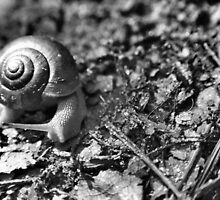 Forest Floor - Snail by Dean Bryant Johnson