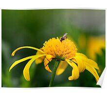Fresh Nectar Poster
