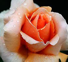 Peach Dew by Deborah  Benoit