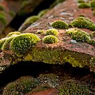 Mosses on the roof tiles by Konstantinos Arvanitopoulos