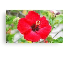 Red In The Sun Canvas Print