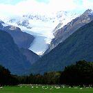 Fox Glacier by Magee