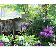 Wagon Delights Photographic Print