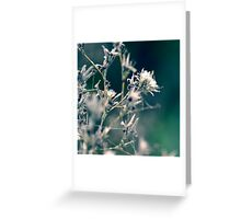 Cotton Forest Greeting Card