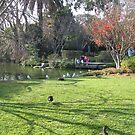 Duck by kossimarsalsa