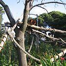 Tree kangaroo by kossimarsalsa