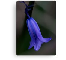 Blue belle in flower Canvas Print