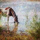 Wild Horse by Jacinthe Brault