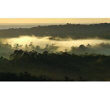 """Trees in the Mist"" Photographic Print"